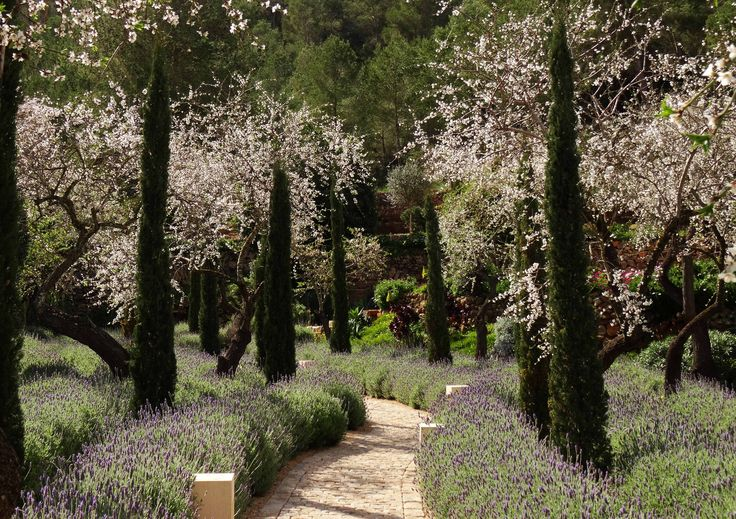 Almonds in bloom, cypresses and lavender flank this winding path.
