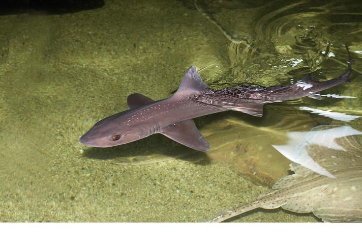 Vissen en andere zeedieren | Dolfinarium
