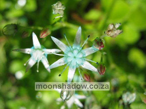 Dainty flowers in #Moonshadow's garden. We love Nature's attention to detail! #Swellendam  #Overberg  #SouthAfrica