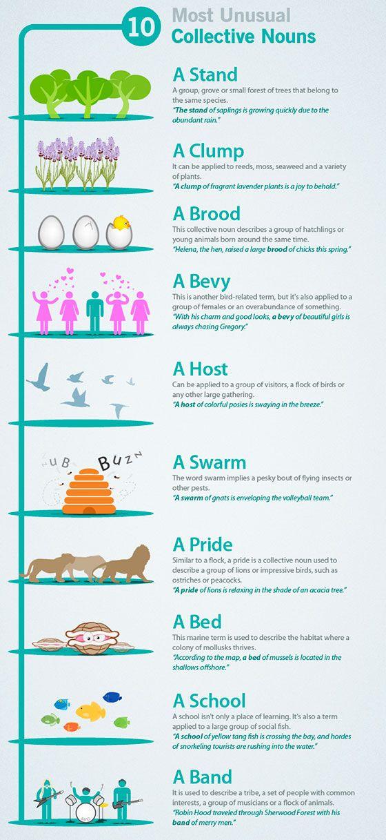 10 самых необычных собирательных существительных в английском языке. Preply