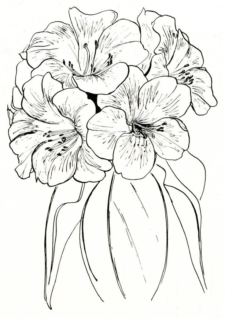 Vireyas Return Rhododendrons Projekte Tattoo Ideen