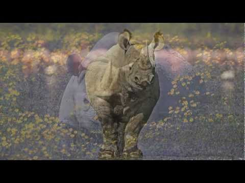 African rhino poaching crisis | WWF-Rhinos once roamed throughout Eurasia and Africa, and were known to early Europeans who depicted them in cave paintings that is why we must fight the murdering swine who poach them for their Ivory.