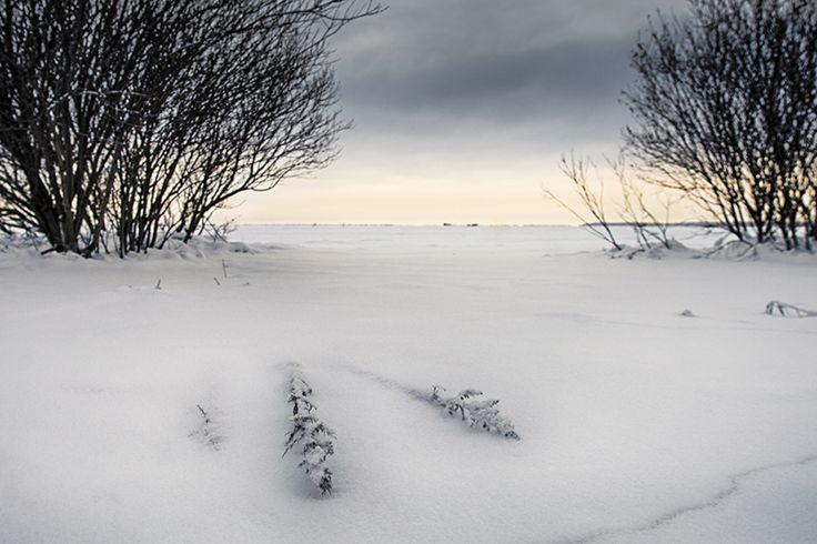 #winter #sea #snow, fallen #reeds #scene by Leena Holmström