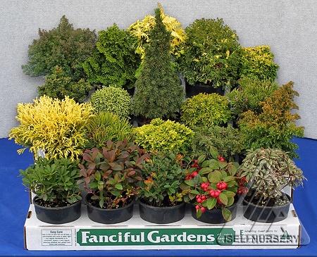 Fairy House Fauna   Fanciful Gardens®  From Iseli Nursery
