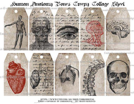 80% Off Human Anatomy Collage SheetCreepy Collage SheetSkull