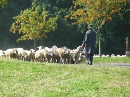 Schafhaltung in Nordrhein-Westalen