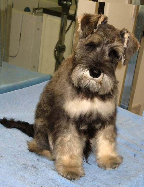 Chonzer Dog Grooming Beard Style Yahoo Image Search Results Haircut Images Mens Fade Grooming Beard Style