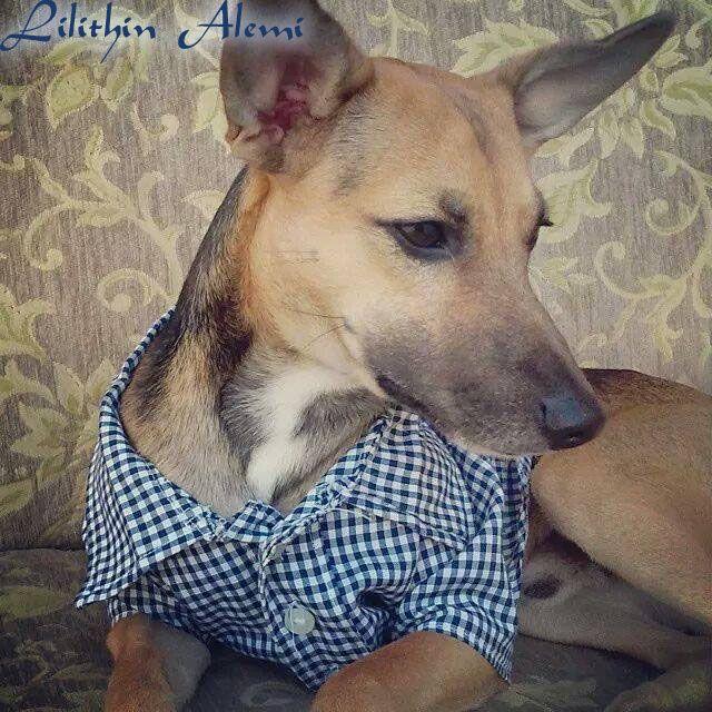 ....# Lilithin #....: Haydut'un Gömleği (köpek gömleği) Dog clothes shirt