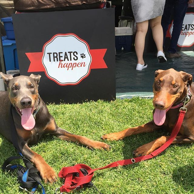Mocha and Bruce the Dobermans stop by the Treats Happen booth.