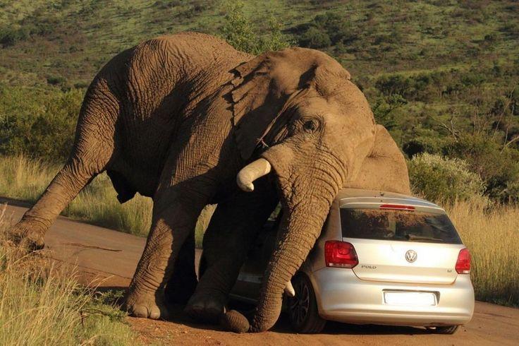 Even elephants have favourite cars.