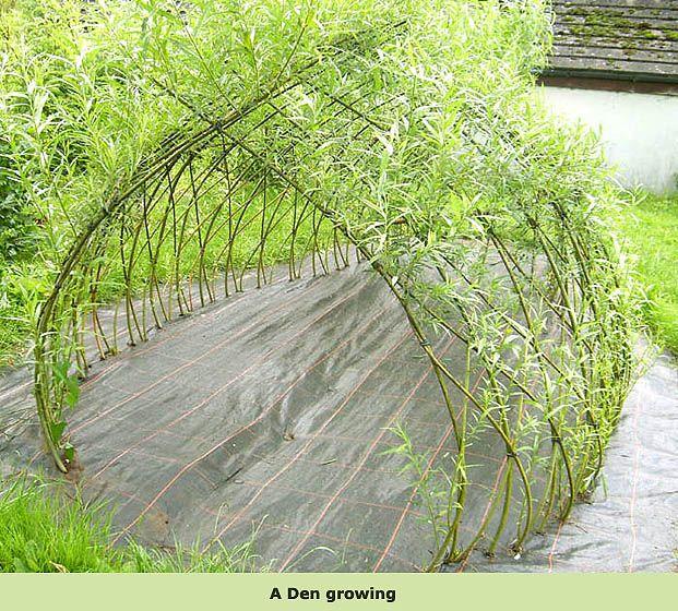 willow hedge structures den in summer