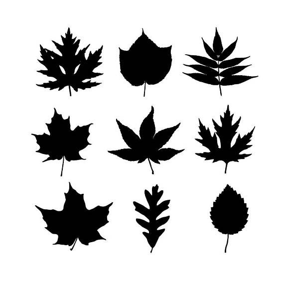 Oak Leaf Silhouette Clipart Vector Silhouettes Riscos Imagens