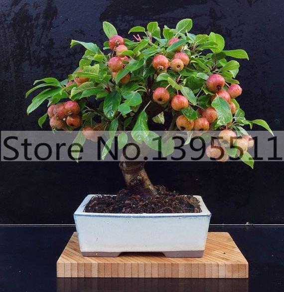 30/bag Mini Apple Fruit Bonsai Seeds, Bonsai Mini Apple Tree, Apple Bonsai Fresh Exotic Tree Seeds-in Bonsai from Home & Garden on Aliexpress.com | Alibaba Group