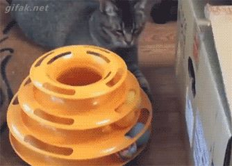 Funny cats - part 233 (40 pics + 10 gifs)