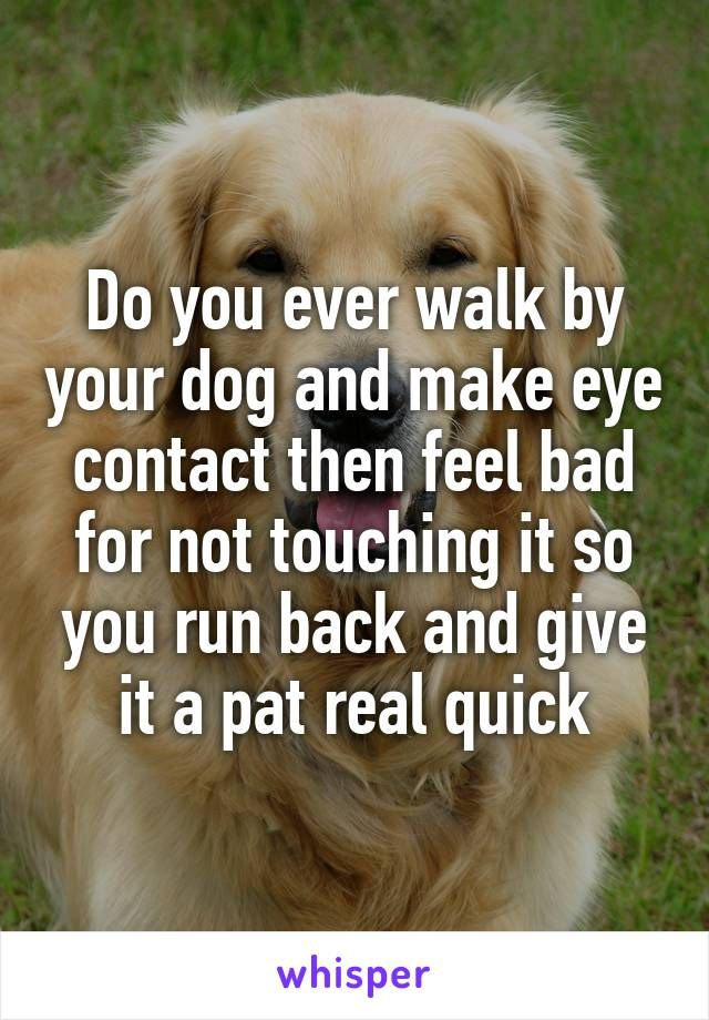 Do you ever walk by your dog and make eye contact then feel bad for not touching it so you run back and give it a pat real quick