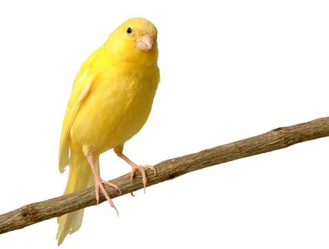 Mejores 41 imágenes de Aves en Pinterest | Pájaros bonitos, Aves ...