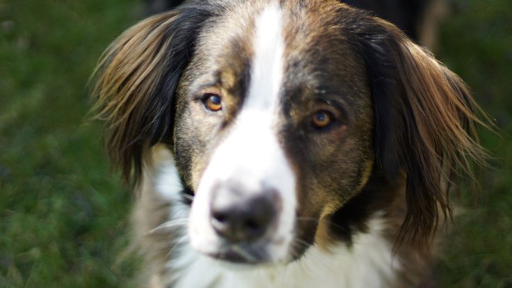 Binc #cuteanimal #dog #dogmodel