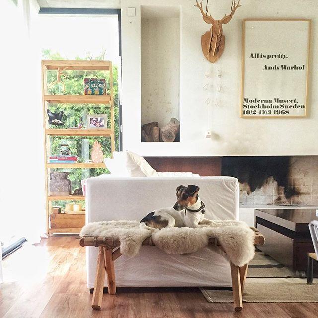Es viernes y Toto lo sabe  Catre cuerito velas almohadones y mil cosas más en #apykahome     #findingtoto #design #diseño #interiordesign #diseñodeinteriores #deco #decoration #decoracion #decorations #home #HOME #homedecor #homedecoration #interior #interiores #interiors #myhome #micasa #myhouse #friday #picoftheday #viernes #jackrussell #white #blanco #madera #wood#apykahome @apykastore