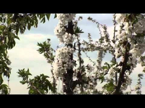 Villa Smeraldi - #ILOVEPOMARIO seconda stagione LA FIORITURA seconda parte