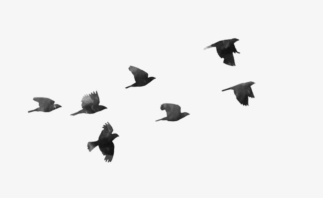 Hand Drawn Flying Bird Flying Bird Drawing Flying Bird Silhouette Birds Flying