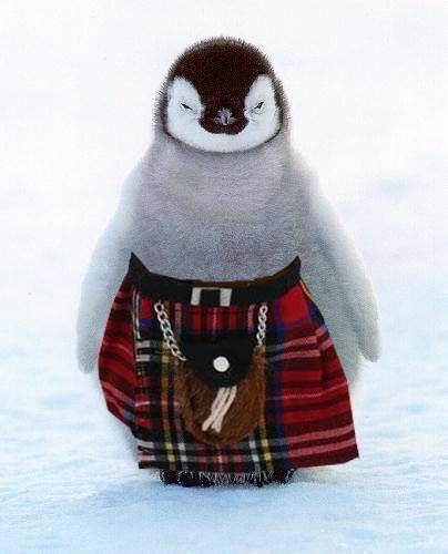 Cute penguin wearing tartan kilt #plaid #scottish -