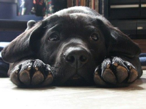 Soooo cute! This is exactly the type of face I adopted. :-)