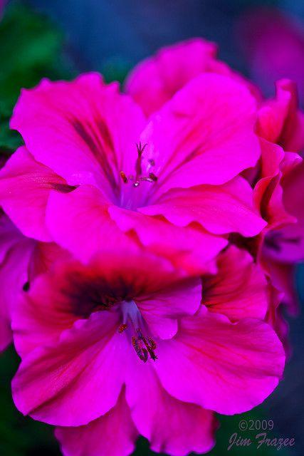 bouquet fleuriste en ligne 59 #fleurs #bouquet