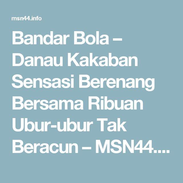 Bandar Bola – Danau Kakaban Sensasi Berenang Bersama Ribuan Ubur-ubur Tak Beracun – MSN44.info