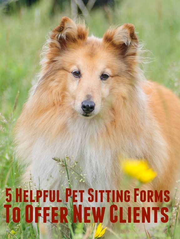 When I have a new pet sitting client, I find that it's very helpful to have a few standard pet sitting forms on hand to collect information.