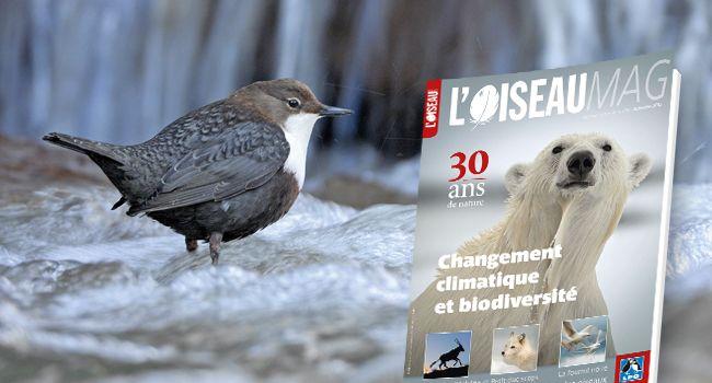 Revue trimestrielle destinée aux ornithologues et amoureux de nature publiée par la Ligue française pour la protection des oiseaux.  BU LILLE 1 Cote 598(05)OIS http://catalogue.univ-lille1.fr/F/?func=find-b&find_code=SYS&adjacent=N&local_base=LIL01&request=000181224