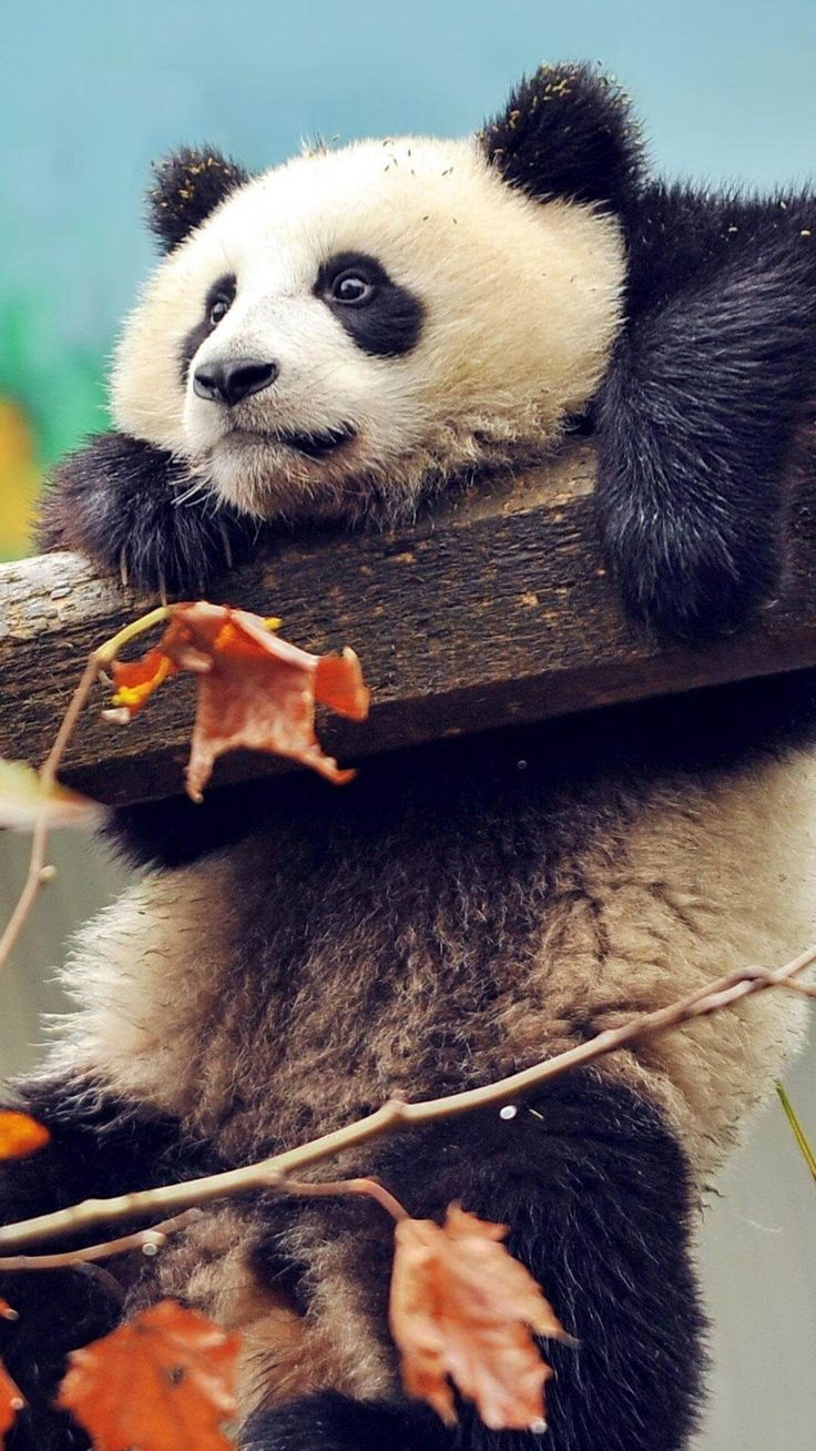 Best 24 Animal Wallpaper for iPhone images on Pinterest ...