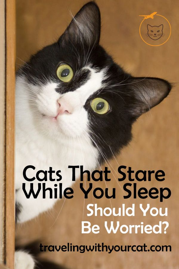 Cats That Stare While You Sleep Should You Be Worried Cats
