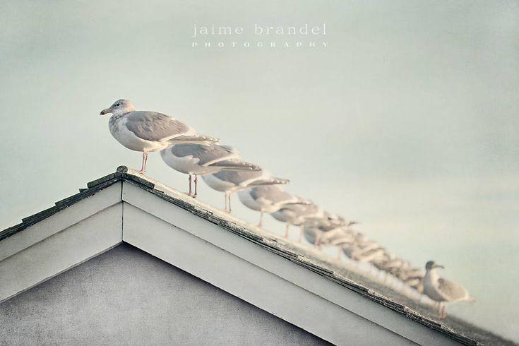 Photography print: seagulls, all in a row, bird photography, fine art print, wall art by JaimeBrandelPhoto on Etsy