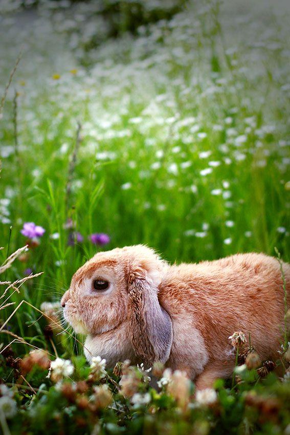 Pin Von Lulu Nova Auf Bunny Susse Tiere Kaninchen Tiere