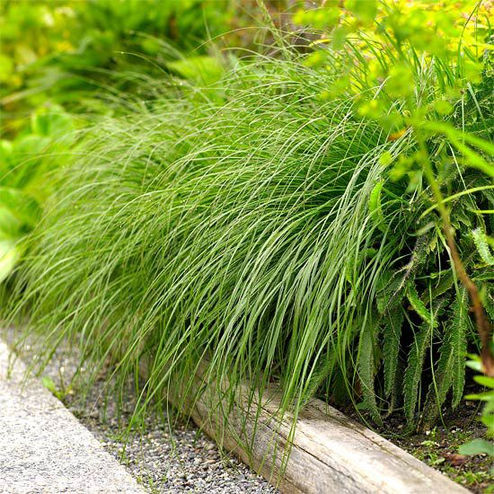 Soften Edges- Soften Edges    Use graceful arching grasses to soften and conceal hard or unsightly edges of beds and borders. Just about any cascading plant can do the trick and look lovely at the same time.