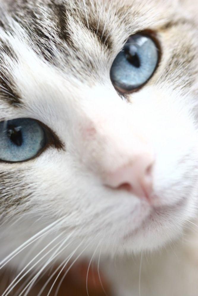El Gato the Cat #cats nice portrait