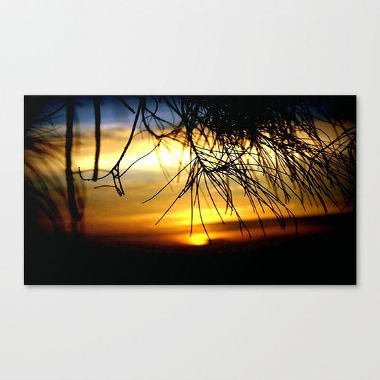 Sunset between Norfolk pine Needles Canvas Print