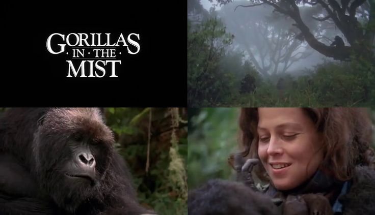 Gorillas in the Mist: The Story of Dian Fossey (1988) Sigourney Weaver stars as Dian Fossey in a look at her life with the gorillas in the African mountains and her battle to protect them from poachers