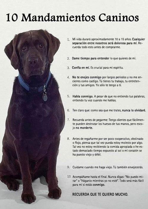 Frases y algo más. 10 Mandamientos caninos