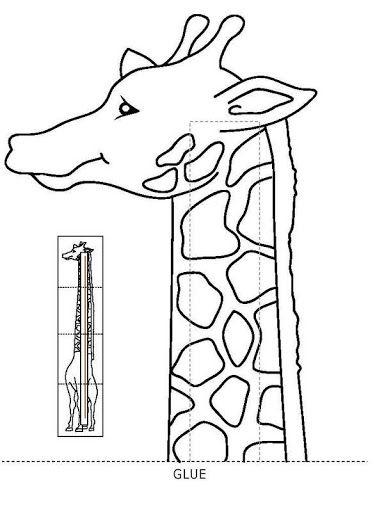 lange giraf 4