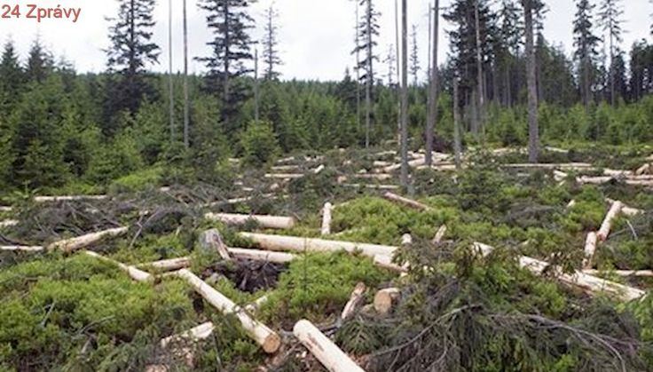 Obce na Šumavě mají zakázat vstup do části území. Správci varují před padajícími stromy