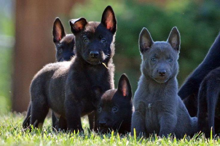 Best 25 Dog Kennels For Sale Ideas On Pinterest Dog