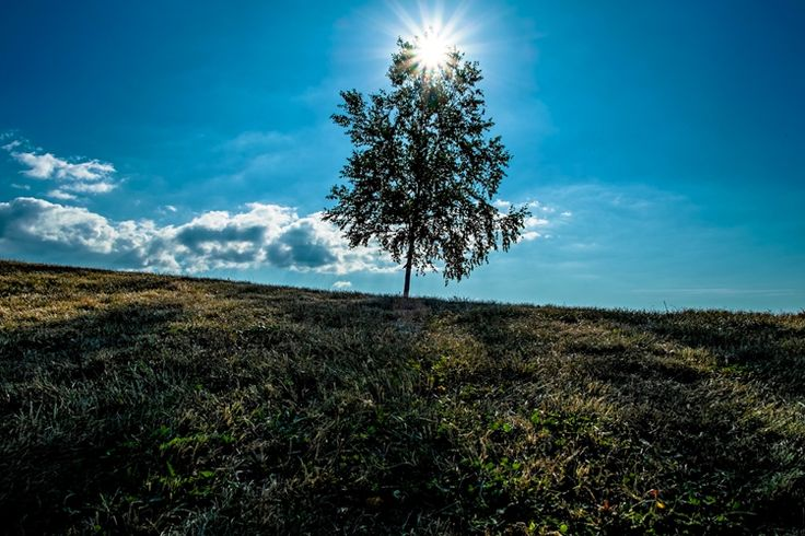 逆光と一本の木(美瑛)