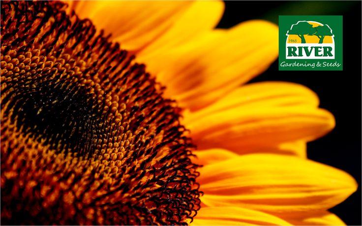 La primavera nos trae luz y flores. En RIVER tienes todos los tratamientos biológico para tener un jardín sano.