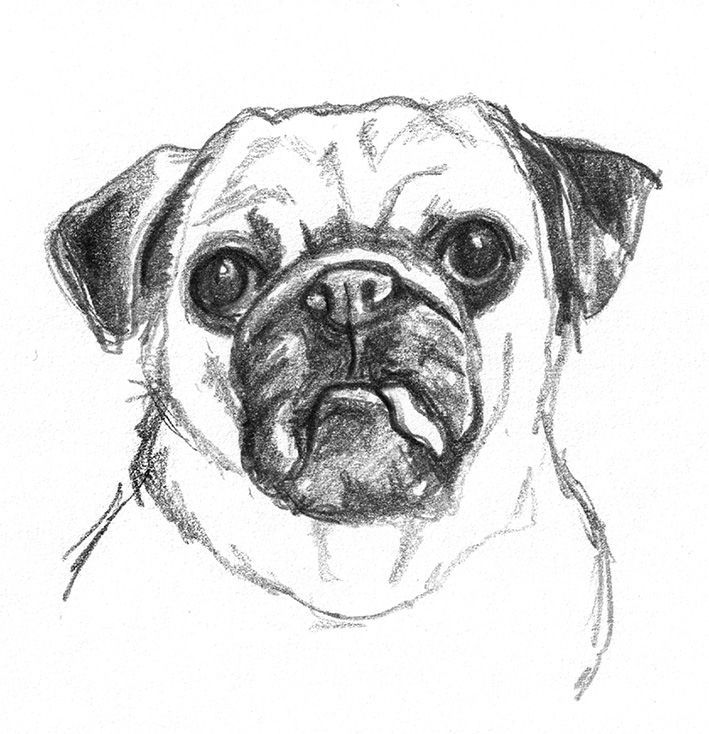 Dog Sketches Pencil Drawings Of Dogs Dog Sketch Dog Pencil