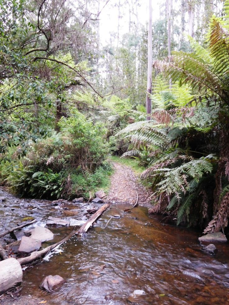 Upper Yarra Track: O'Shea's Mill: First camp after Walhalla:  Gippsland, Victoria, Australia: Ultra Light Hiking Backpacking