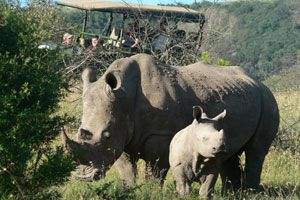 The recently refurbished Protea Hotel Kruger Gate leads the Fight Against Rhino Poaching. #KrugerGivesBack