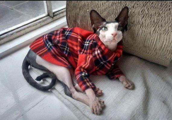 Sphynx cat clothes Emma's plaid donates to Feline by SimplySphynx