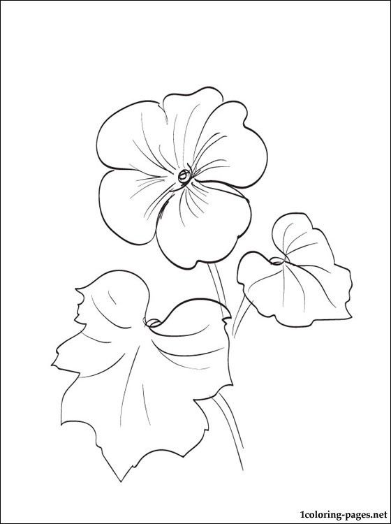 Geranium coloring page to print out | Coloring pages
