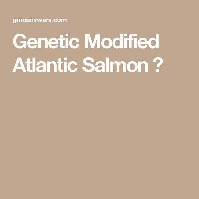 Genetic Modified Atlantic Salmon ?